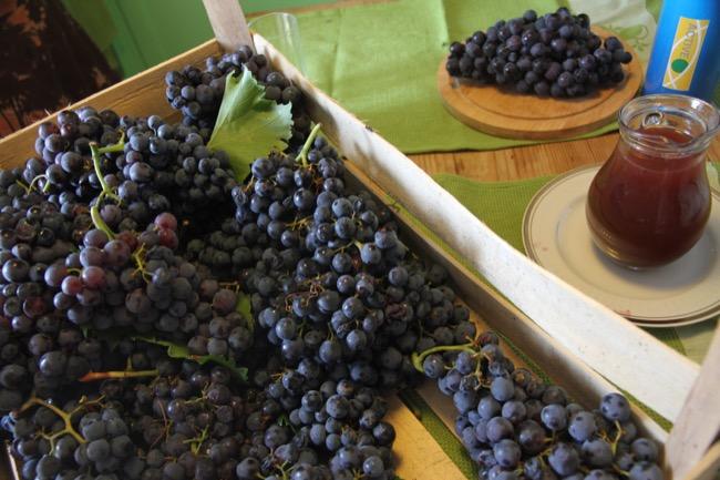 varenik grožđe